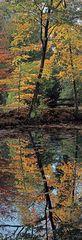 Doppelter Herbst