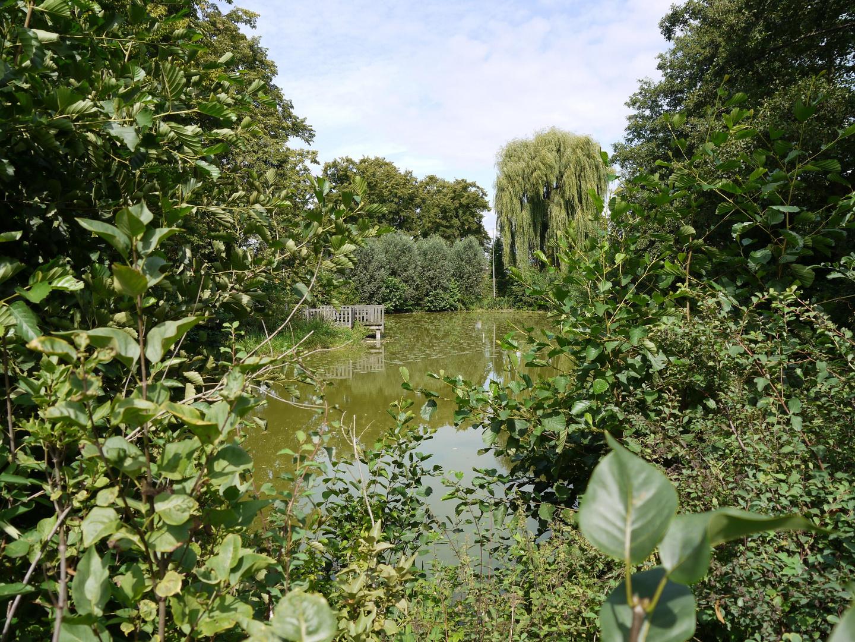 Dorfteich in Asbeck