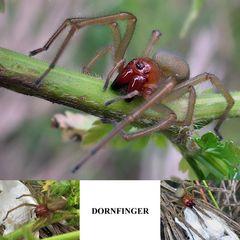 Dornfinger