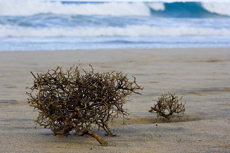 dornige Wellen