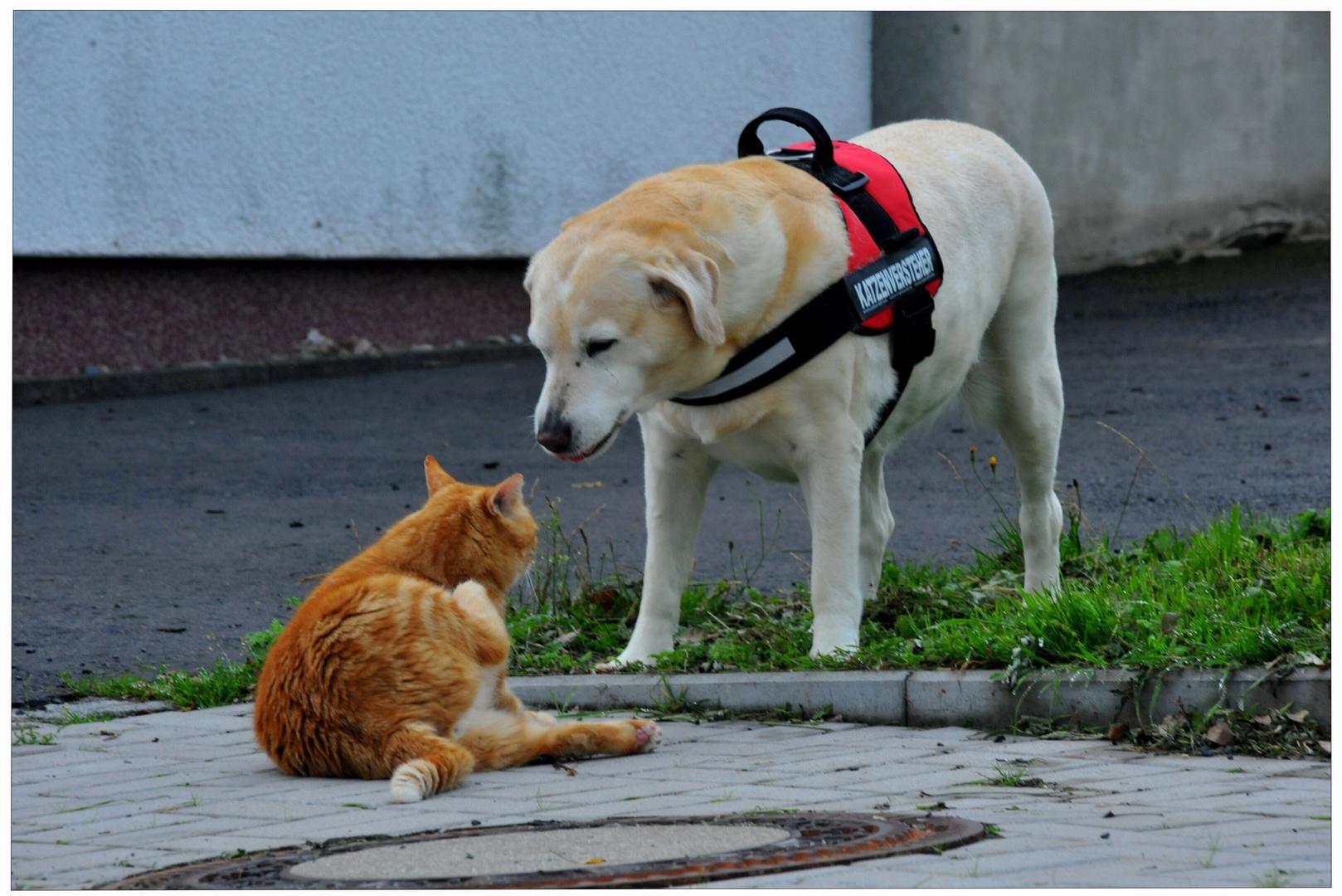 dos inseparables amigos (zwei unzertrennliche Freunde)
