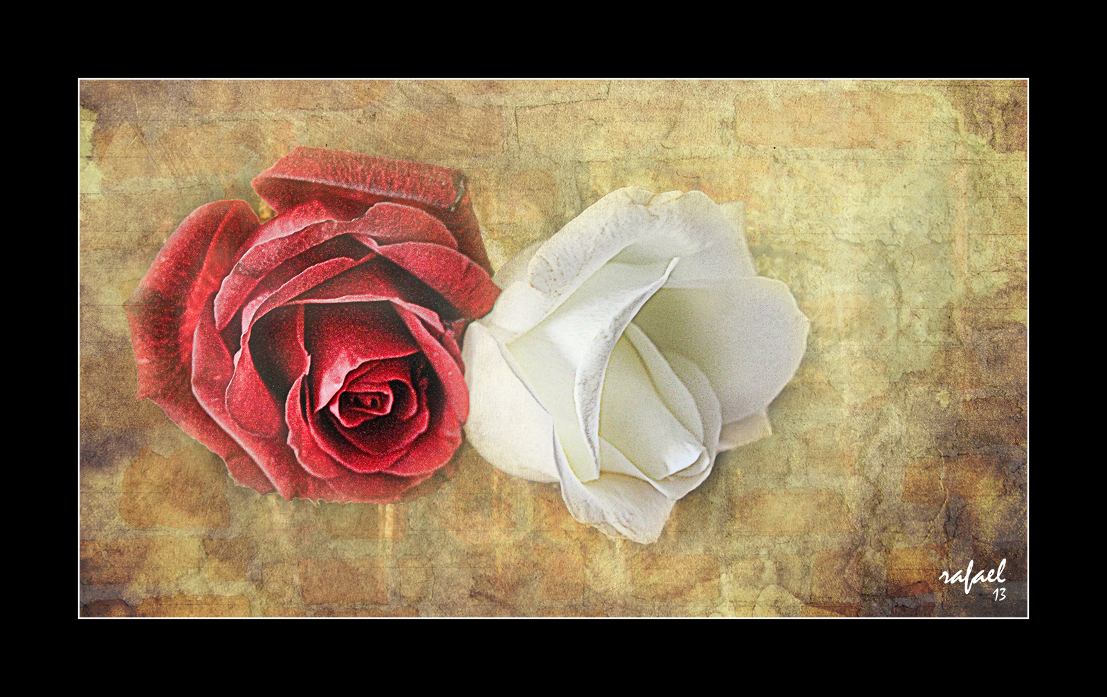 Dos rosas