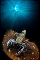 double exposition shrimp