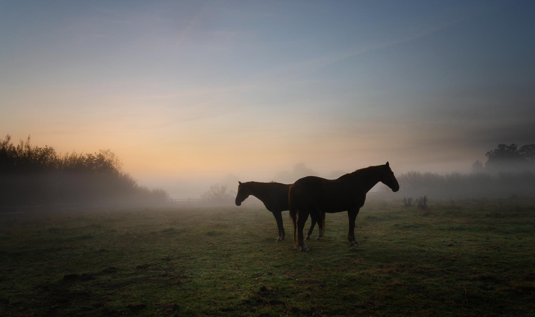 * double horses *