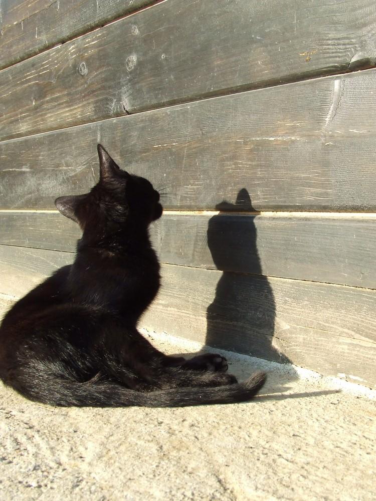 Double jeu de chat