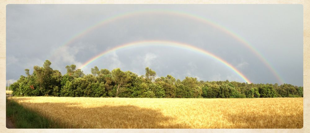 Double Rainbow Field