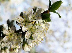 Douceur de début de printemps