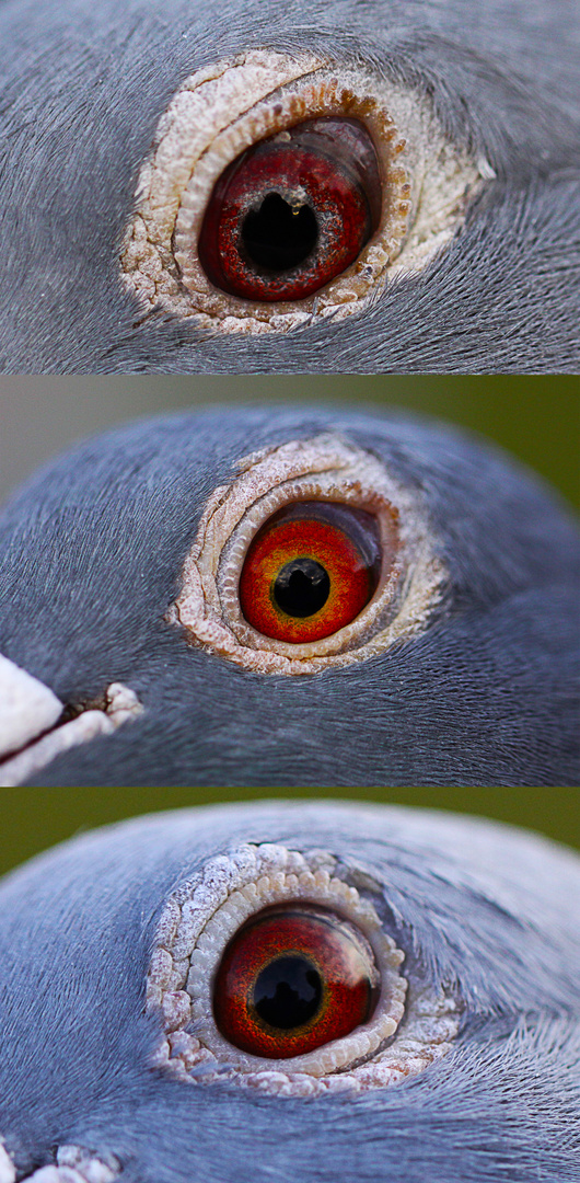 Dove's eyes - look closer