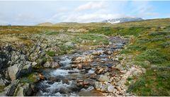 Dovrefjell Nasjonalpark