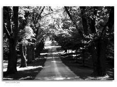 Down a Country Lane...