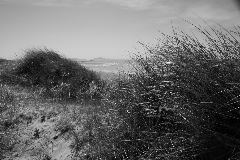 Down in the dunes
