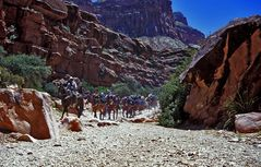 Down to Havasupai