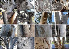 Down Under-Baum(rinden)-Collage