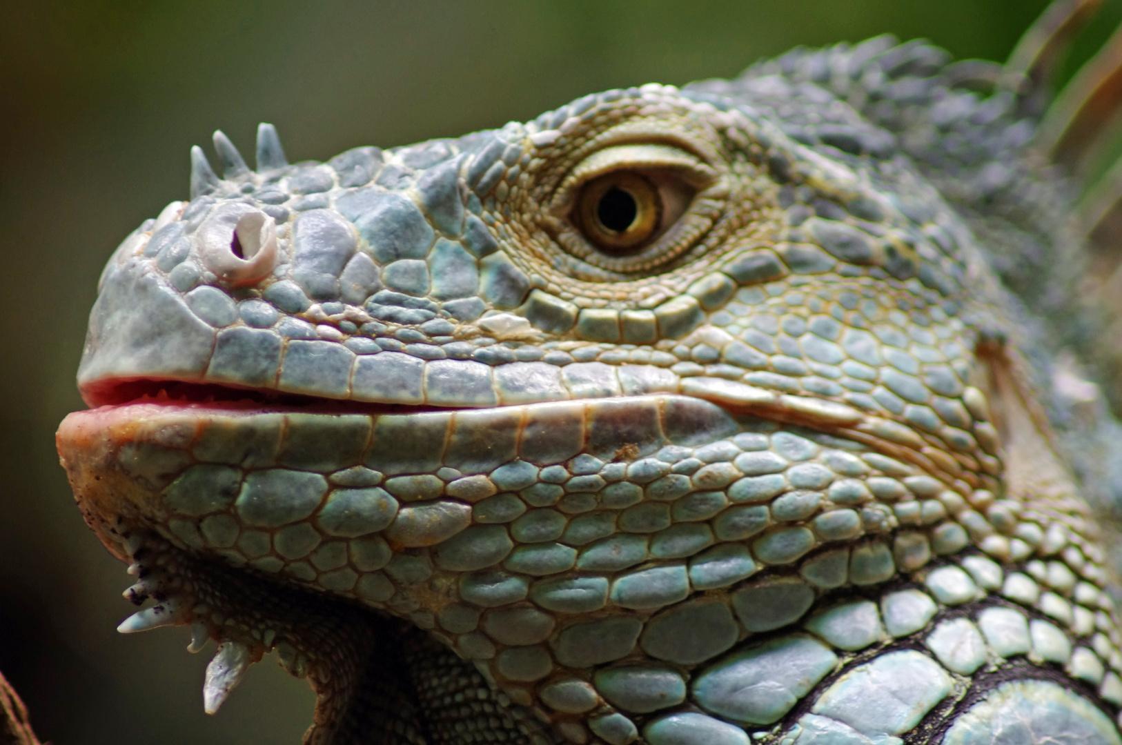 Drache oder Reptil ????