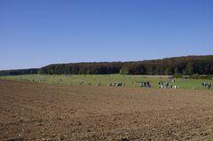 Drachenfest in Grabenstetten