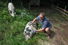 Drago bei seinen Schweinen!