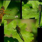 Dragonflies...