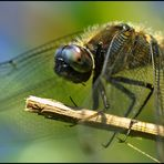 dragonflies time.....