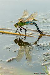 Dragonfly #23