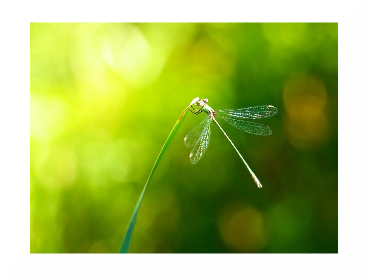 .: dragonfly :.