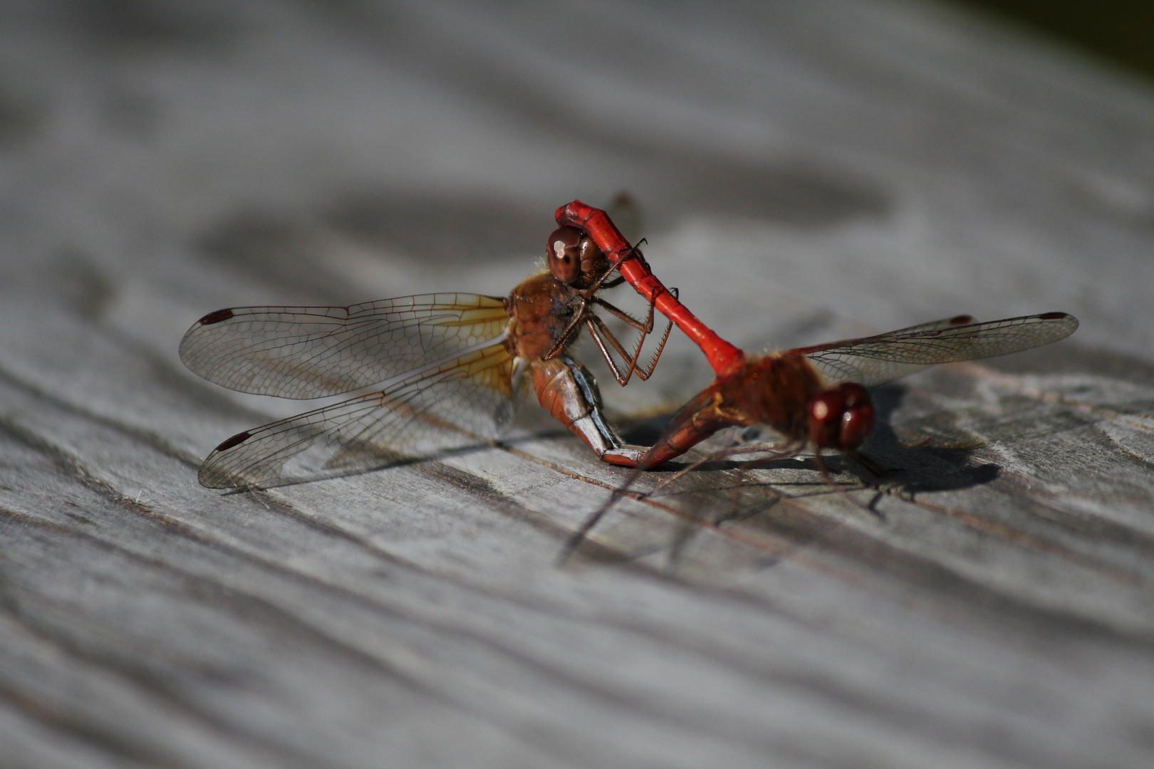 Dragonfly coupling