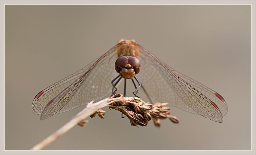 Dragonfly poleposition