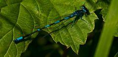 dragonfly RELOAD