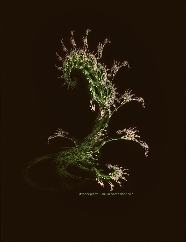 Dragonplant