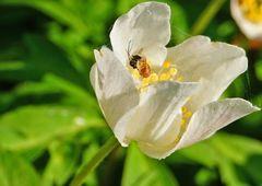 Drama in der Blüte