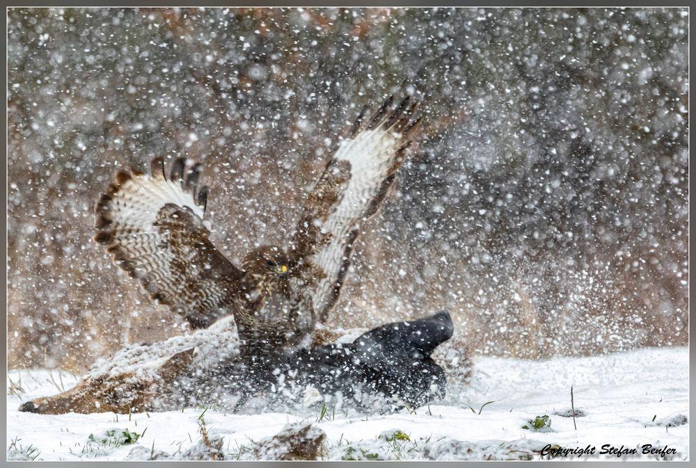 Dramatik im Schneesturm 1