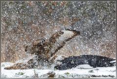 Dramatik im Schneesturm 2