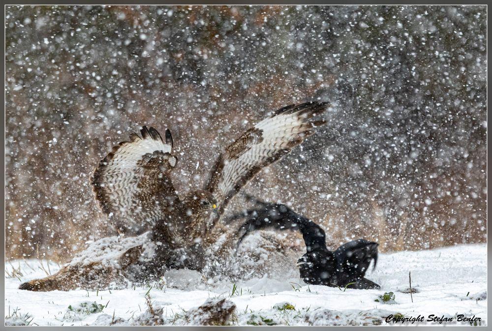 Dramatik im Schneesturm 3
