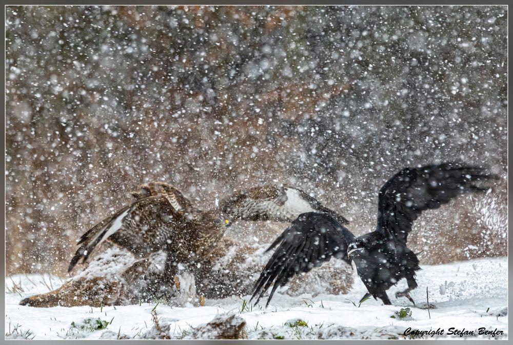 Dramatik im Schneesturm 4