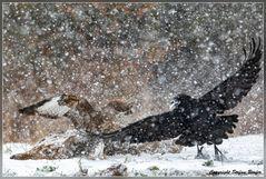 Dramatik im Schneesturm 5