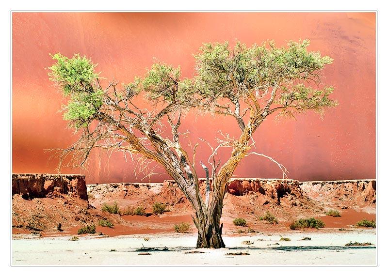 Dramatischer Baum