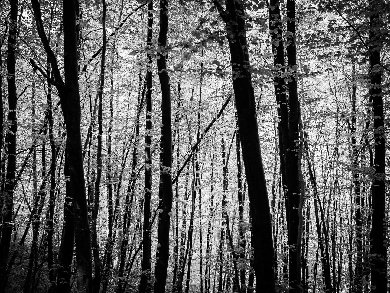 Draußa em Wald...