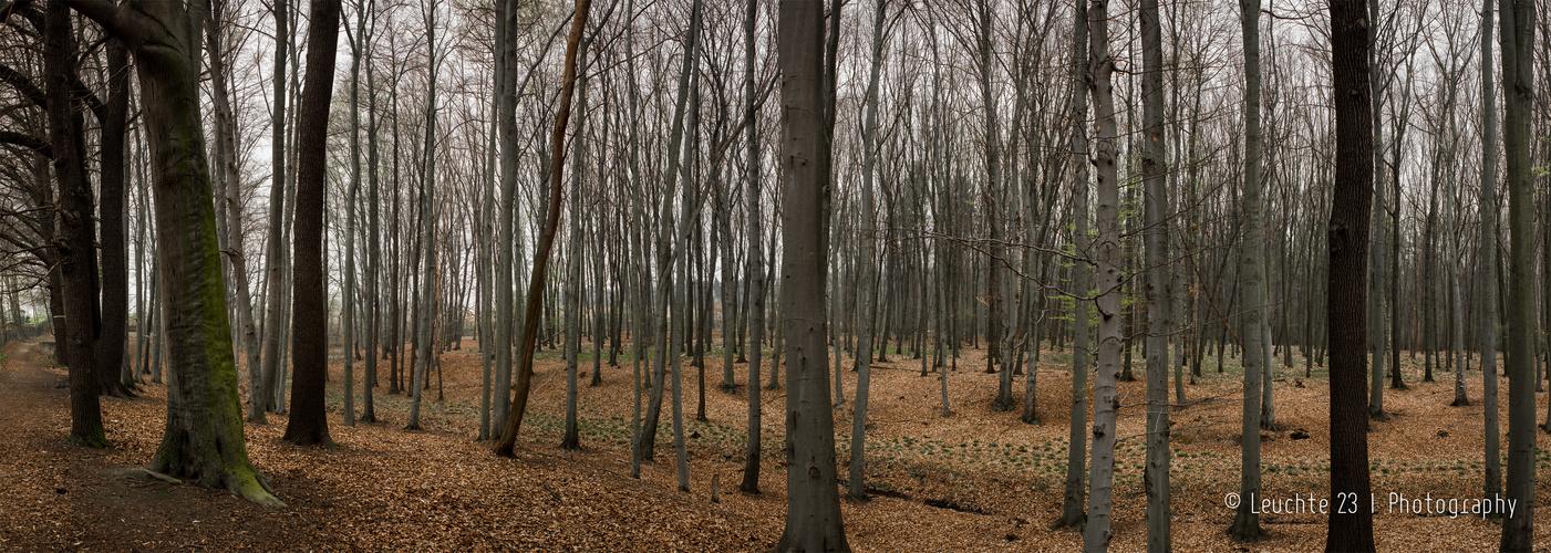Draussen im Wald