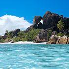 *Dream Beach*