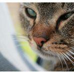 ``Dreaming CAT ' '