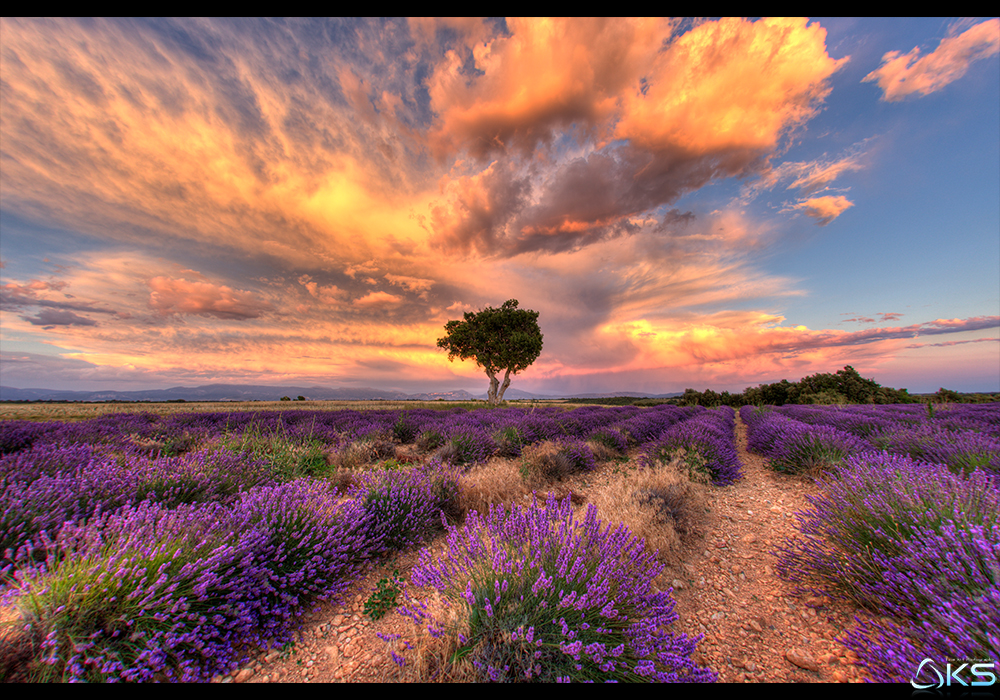 Dreaming of Provence