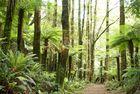 Dreamwood New Zealand