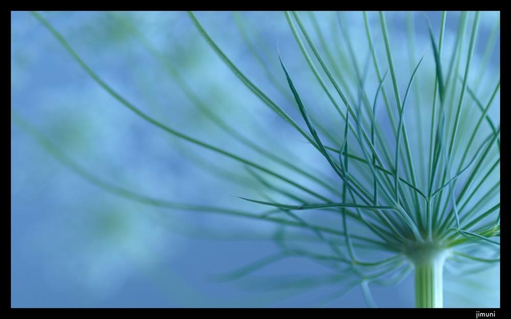 dreamy blue 04