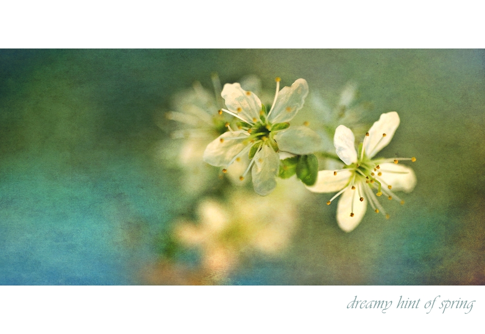 dreamy hint of spring