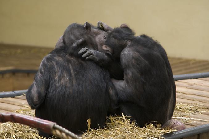 Drei Affen Nichts Hören Nichts Sehen Nichts Sagen Foto