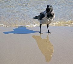 Drei am Strand