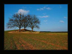 Drei Bäume in der Fidei in neuem Licht