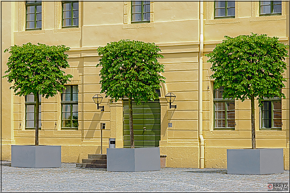 Drei Bäume vor der Tür