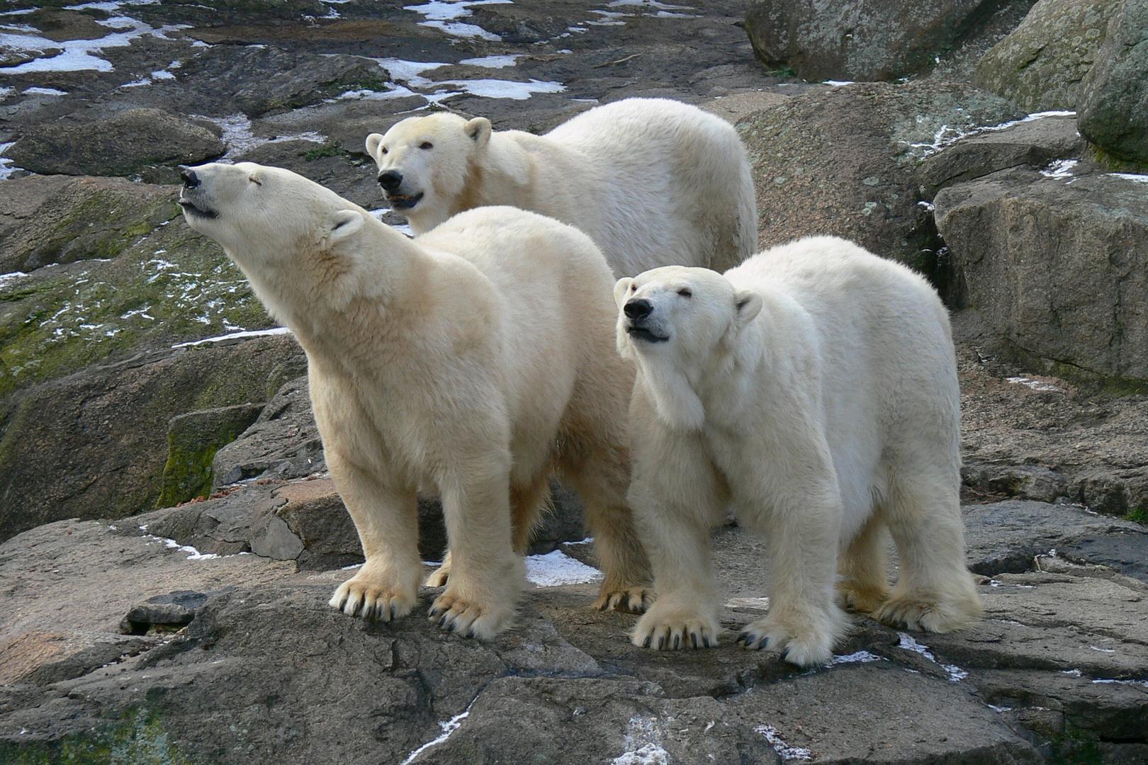 Drei Damen beim Schnüffeln