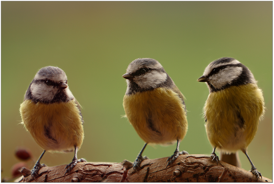 Drei Damen vom Grill...