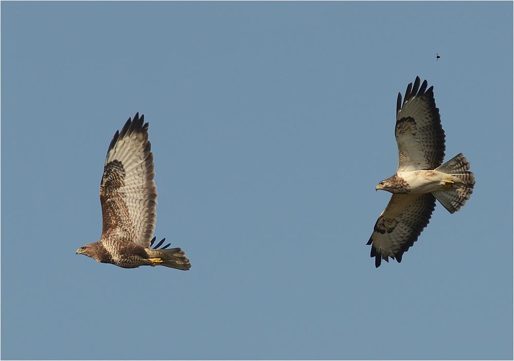 Drei Flieger